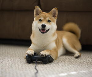 dog, cute, and game image