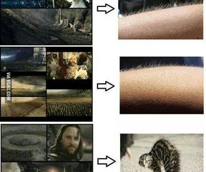 cat, hair, and lord of the rings image