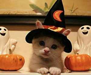 cat, Halloween, and animal image