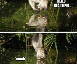 monkey, kiss, and funny image