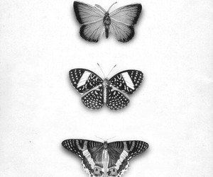 black and white, cool, and butterfly image