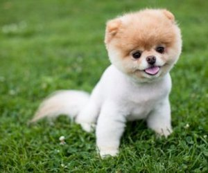dog, boo, and puppy image