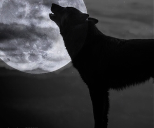 animal, black, and blackandwhite image