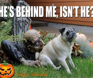 funny, Halloween, and dog image