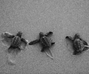 turtle, cute, and beach image