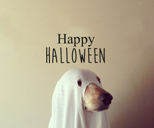 Best, boo, and dog image