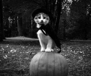 Gatos, cats, and gatinhos image