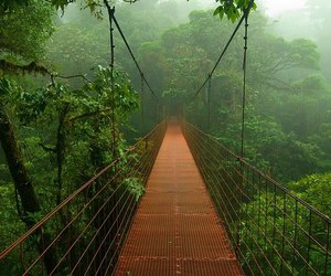 bridge, forest, and nature image