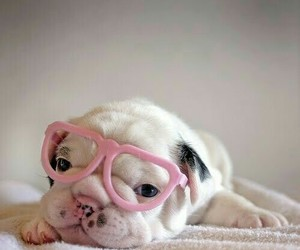 dog, pink, and love image