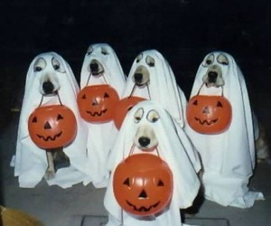 dog, Halloween, and ghost image