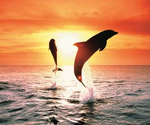 dolphin, sun, and sunset image