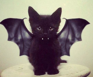 cat, black, and bat image