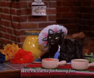 gif, salem, and cat image