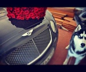 car, dog, and rose image