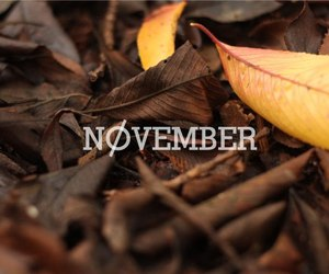 leaves, autumn, and november image
