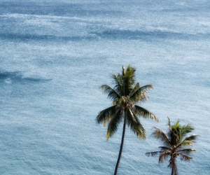 ocean, summer, and palms image