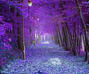 purple, autumn, and tree image
