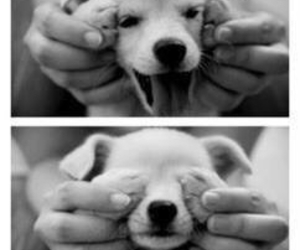 dog, happy, and smile image