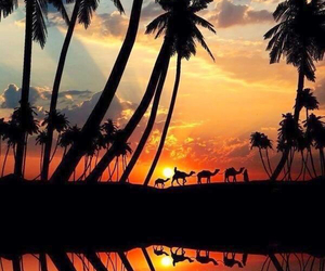 light, shadows, and camels image