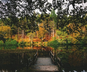 amazing, fall, and autumn image
