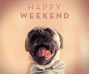 happy, pug, and weekend image