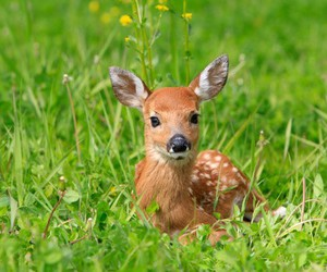 animal, bambi, and Biche image