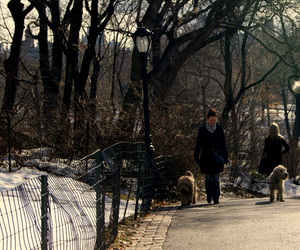 animal, art, and Central Park image