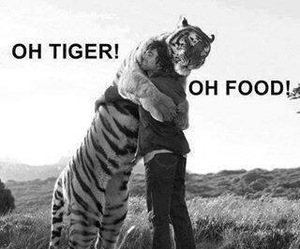 tiger, food, and funny image