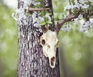 animal, flowers, and tree image