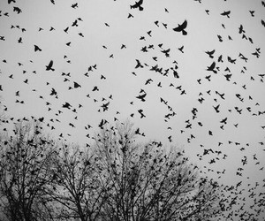 bird, black and white, and sky image