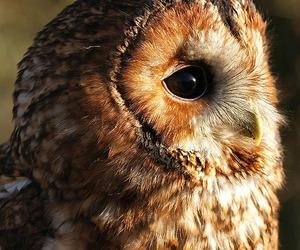 animal, owl, and bird image
