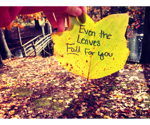 fall, leaves, and pick up lines image