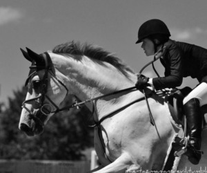 horse, jumping, and passion image
