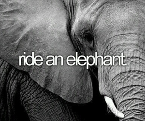 animal, elephant, and bucket list image