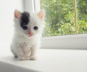 adorable, little, and pussy image
