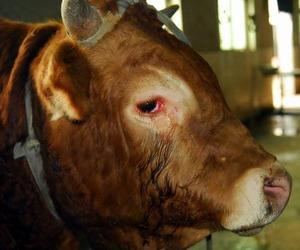 animals, vegan, and veganism image