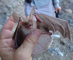 animal, bat, and cute image