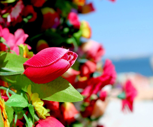 flower, natuur, and red image