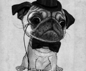 art print, puig, and dog image