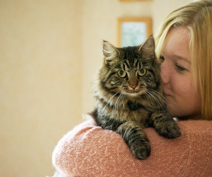 animal, blonde, and cat image