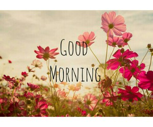 flowers, fresh, and good morning image