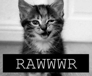 cat, cute, and rawr image