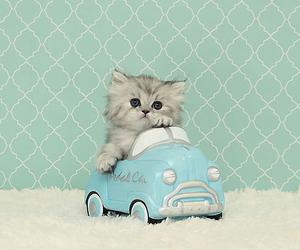 car, cat, and cute image