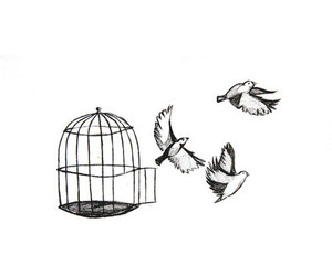 bird, cage, and free image