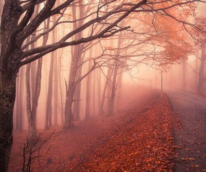 autumn, cold, and trees image