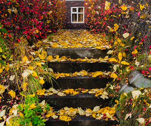 autumn, cosy, and nature image