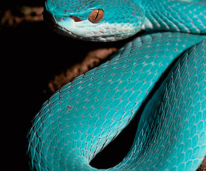snake, blue, and animal image