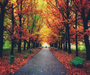 nature, autumn, and tree image