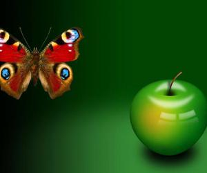 apple and butterfly image