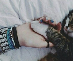 cat, grunge, and meow image